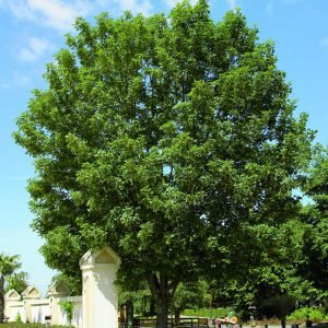 Deciduous plants and broadleafed evergreens incl climbing plants